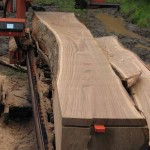 sweet chestnut slab
