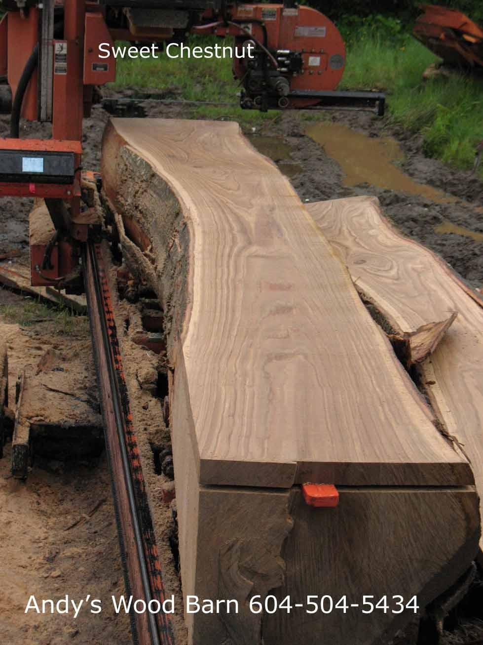 sweet chestnut slab